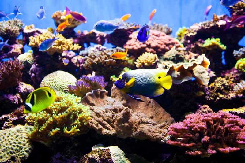 Coral Reef Aquarium Air Laut