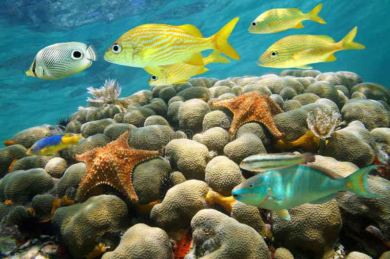Fish-and-Invertebrate