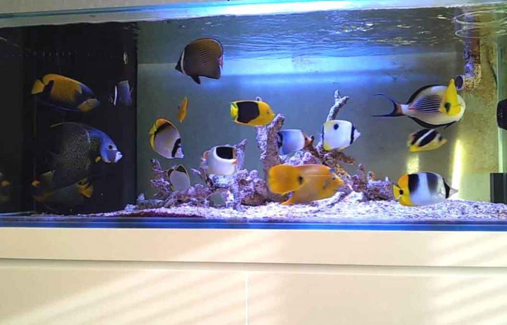 Fish Only Aquarium Air Laut