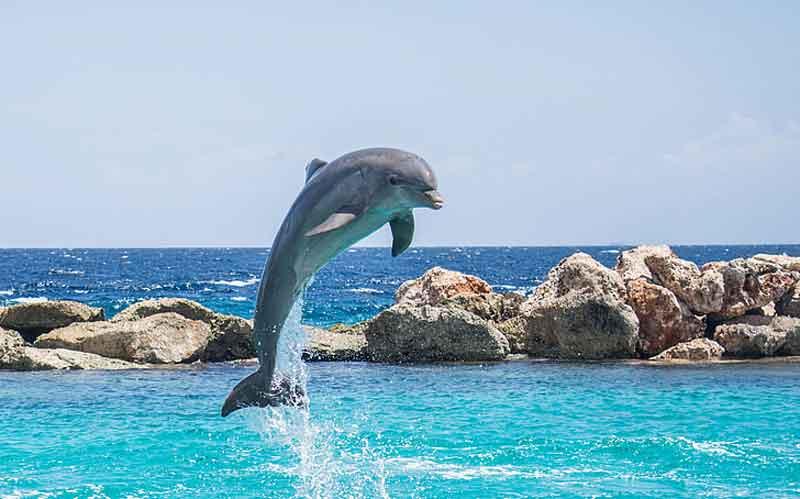lumba-lumba Gambar Hewan lucu