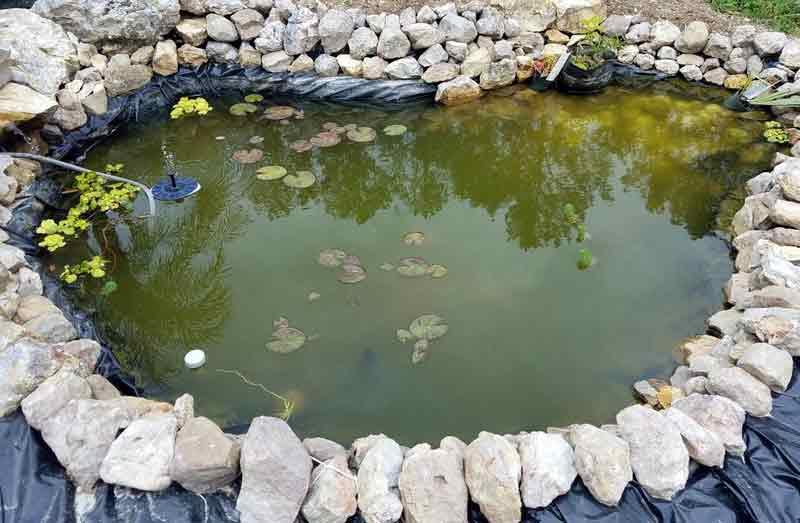 Cara menghilangkan lumut di kolam ikan