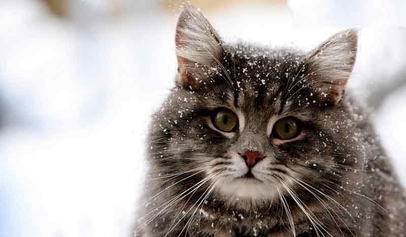 Kesalahan Memelihara Kucing