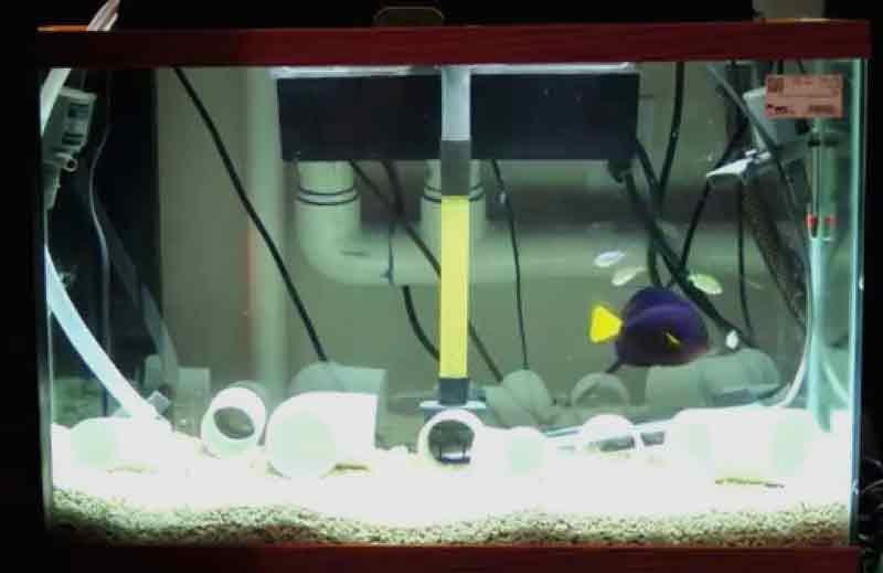cara membuat aquarium karantina