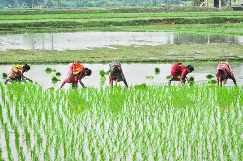 Bidang Usaha Pertanian