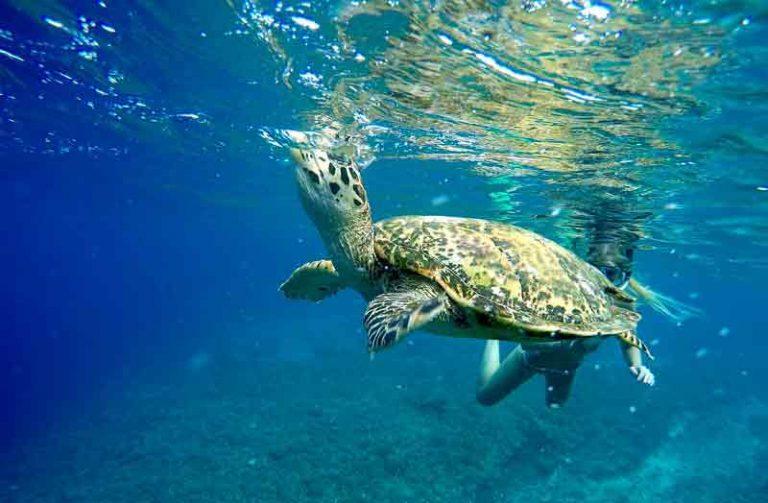 Cara Melestarikan Sumber Daya Alam Laut