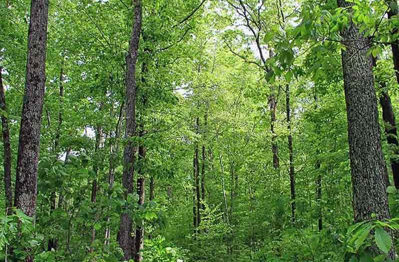 Hutan yang Lestari
