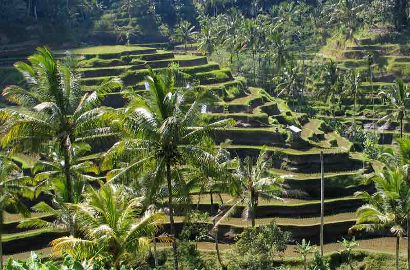 Best Agrotourism in bali